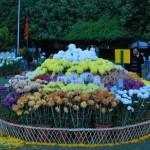 Chandigarh Fitness Trail & Flower Garden